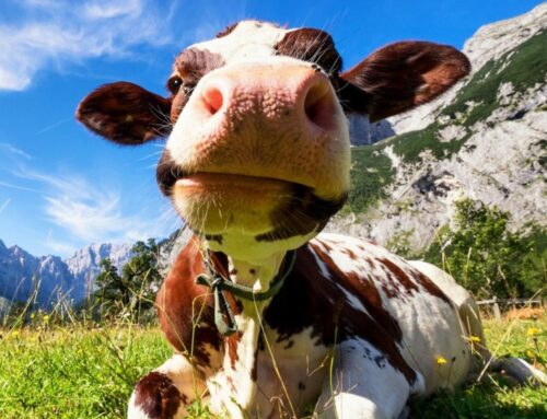 The Benefits of Bovine Colostrum for your Dog