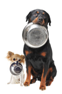 hungry Rottie with food bowl
